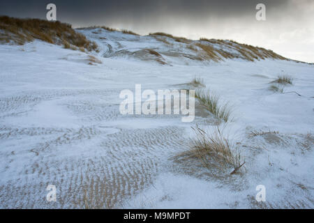 Dunes with beach grass on snow, North Sea, Langeoog, East Frisia, Lower Saxony, Germany - Stock Photo