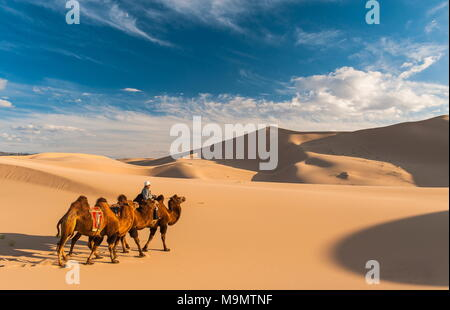 Nomad with camels (Camelidae) riding through the sand dunes, Gobi desert, Mongolia - Stock Photo