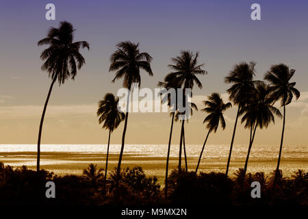 High palm trees (Cocos nicifera) in front of the golden sea in the sunset, Moorea, Pacific, Society Islands - Stock Photo