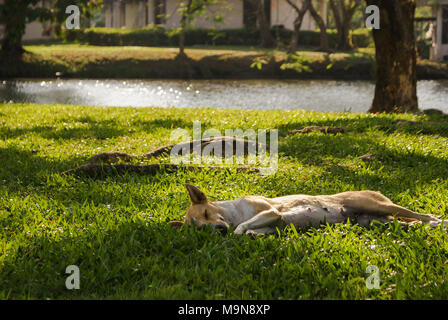 A happy dog, sleeping under the tree, near the ditch in late afternoon. - Stock Photo