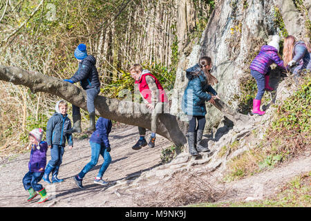 Group of young children playing outside and climbing on a tree in Winter in the UK. - Stock Photo