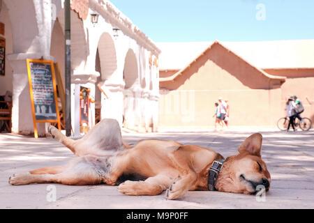 Sleeping street dog in the city of San Pedro de Atacama, Chile. - Stock Photo