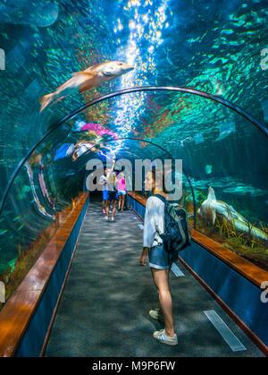 Young woman, visitor in aquarium tunnel, tunnel under aquarium, Loro Parque, Loro Park, Puerto de la Cruz, Tenerife, Canary Islands, Spain - Stock Photo
