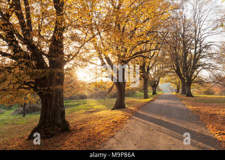 Tree-lined avenue in autumn, Swabian Alps, Baden-Württemberg, Germany - Stock Photo