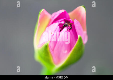 lotus  isolate on background in spring summer,front view from the top, technical cost-up. - Stock Photo