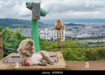 Top view of Kyoto from Arashiyama mountain with monkeys and binocular, cloudy day, focus on foreground monkeys - Stock Photo