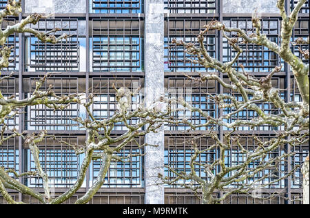 Plane-tree branches without leaves in front of the windows of an office building - Stock Photo