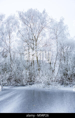 White frozen trees on the edge of a frozen ditch in the Amsterdamse Bos in the Netherlands. - Stock Photo