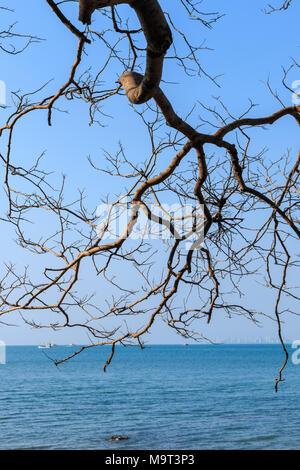 Leafless tree over blue sea - Stock Photo
