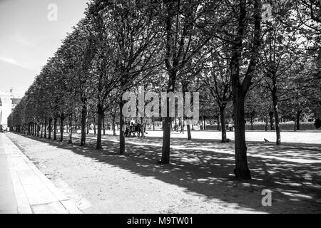 Tuilleries Garden tree-lined vista leading to Louvre Museum. Summer view of the Terrasse du Bord de l'Eau in Paris, France in black and white - Stock Photo