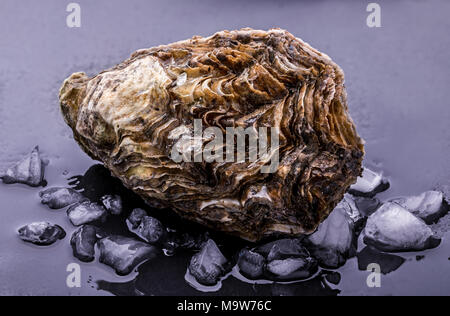 Fresh oyster isolated with shadow on dark background. Clipping path. - Stock Photo