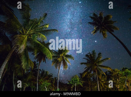 Night shot with palm trees and milky way in background, tropical warm night - Stock Photo
