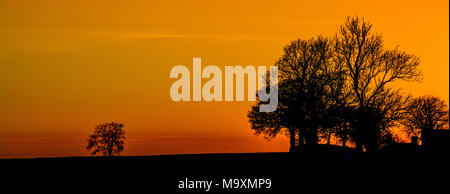 Sunset with tree silhouette, - Stock Photo
