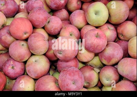 Assorted farm fresh apples in a retail display at historic 1837 Franklin Cider Mill, Bloomfield Hills, Michigan, USA. - Stock Photo