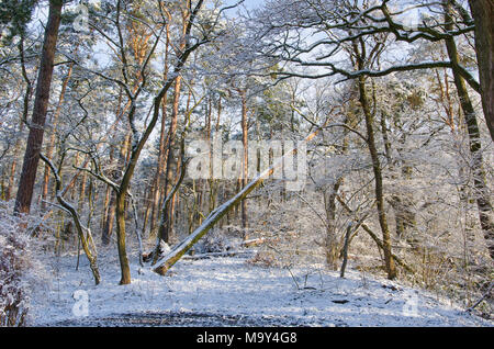 beautiful snow covered forest wilderness during a sunny winter morning - Stock Photo