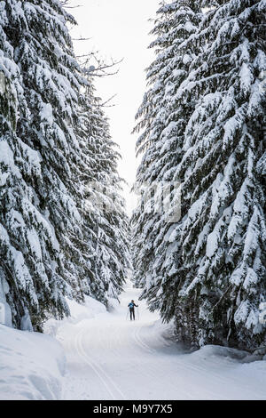 Cross country skier on a groomed trail. Stevens Pass Nordic center, Washington State, USA. - Stock Photo