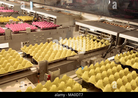Egg Carton - Stock Photo