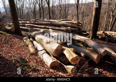 Germany, felled and stacked beech trees in the Ardey mountains near the city of Wetter.  Deutschland, Ruhrgebiet, gefaellte und gestapelte Buchenstaem - Stock Photo