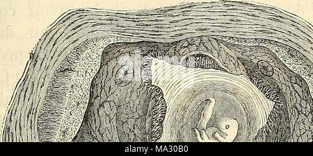 . Embryologie, ou, Traité complet du développement de l'homme et des animaux supérieurs - Stock Photo