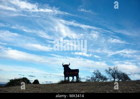 Stier auf Mallorca - Stock Photo