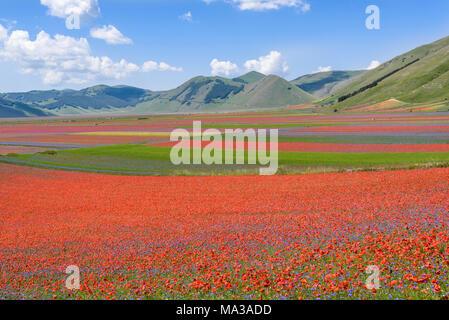 Blooming fields in Mountains Sibilini in Castelluccio di Norcia, Umbria,Italy. - Stock Photo