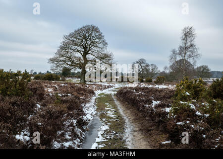Winter at Mogshade Hill with Silver Birch and Oak Trees - Stock Photo