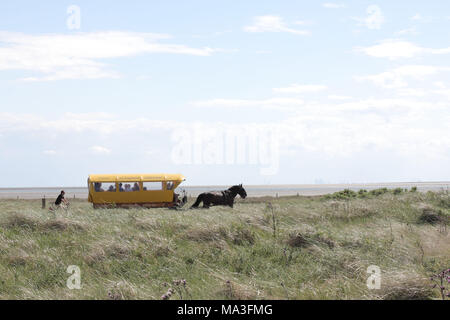 Horse-drawn carriage transporting tourists on the island of Juist - Stock Photo