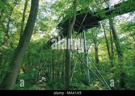 The treetop walkway in the Hainich National Park through the beech tree in Thuringia, Germany - Stock Photo