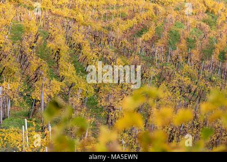 vineyards of prosecco wine in autumn, road of wine, valdobbiadene, treviso, veneto, italy - Stock Photo