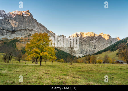 Eng, Riss Valley, Vomp, Schwaz district, Tyrol, Austria, Europe. Sycamore maple in autumn colors at sunrise with the Mount Spritzkar and Mount Grubenkar - Stock Photo