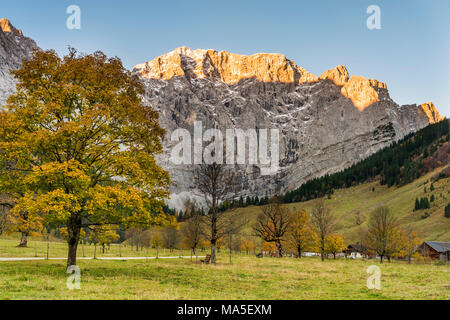 Eng, Riss Valley, Vomp, Schwaz district, Tyrol, Austria, Europe. Sycamore maple in autumn colors at sunrise with the Mount Grubenkar - Stock Photo