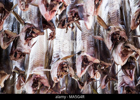 Dried cod in Lofoten Islands, Norway - Stock Photo