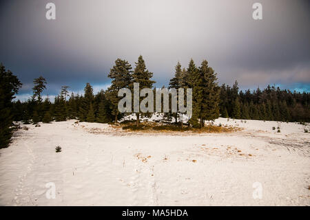 Germany, Harz, forest in winter - Stock Photo