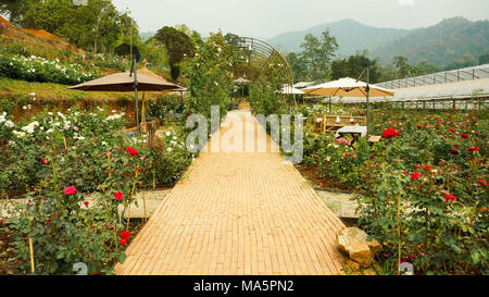Morning in the rose garden - Stock Photo