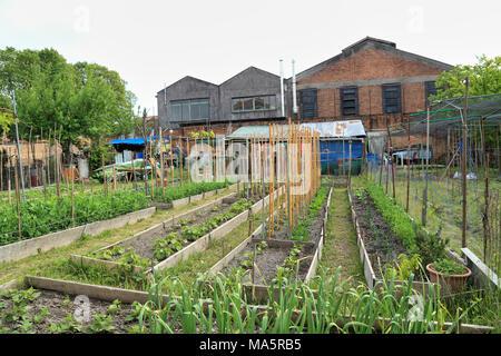 Community gardens in Murano - Stock Photo