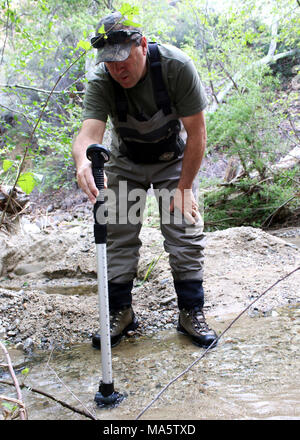 Tim Hovey, a senior environmental scientist, specialist, with the California. ANGELES NATIONAL FOREST, Calif. (April 7, 2014) - Tim Hovey, a senior environmental scientist, specialist, with the California Department of Fish and Wildlife (CDFW) tests water velocity of a creek to confirm viability for unarmored threespine sticklebacks, a federally and state endangered species. A team of biologists and scientists from the U.S. Fish and Wildlife Service and CDFW rereleased 151 unarmored threespine sticklebacks into the creek April 14, after conducting an emergency rescue of the fish late last year - Stock Photo