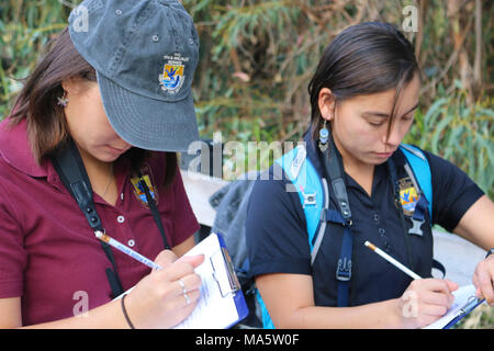 USFWS biologists Kendra Chan (left) and Karen Sinclair (right) record. VENTURA, Calif. - (November 16, 2017)  U.S. Fish and Wildlife Service Kendra Chan (left) and Karen Sinclair (right) record data on overwintering monarchs sighted at Camino Real Park. The Monarch Butterfly Thanksgiving Count provides critical data on monarch butterfly population trends. - Stock Photo