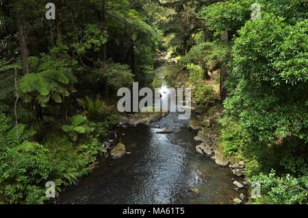 small river flowing through vibrant green forest - Stock Photo