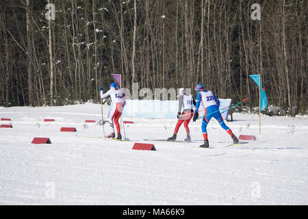qualifying starts for skiers compete at the mass start in the men's 15 km - Stock Photo