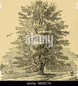 . The elements of forestry, designed to afford information concerning the planting and care of forest trees for ornament or profit and giving suggestions upon the creation and care of woodlands with the view of securing the greatest benefit for the longest time, particularly adapted to the wants and conditions of the United States - Stock Photo
