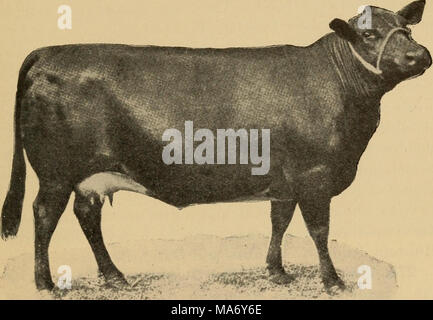 . Elementary principles of agriculture; a text book for the common schools . Fig. 130. A typical Aberdeen Angus. sized. The Crookshanks, or Scotch strain, are low, have block forms with large scale, heavy coats of hair, and mature quite early. * 270. The Herefords take their name from the county of Hereford, England, where the breed originated. They are typically a beef breed, hardy, early maturing, and well suited to range conditions. In milk-production they are very poor. The red body color and white face are well-fixed marks for the breed. (See Fig. 123.) - Stock Photo