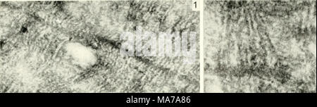. Electron microscopy; proceedings of the Stockholm Conference, September, 1956 . - Stock Photo