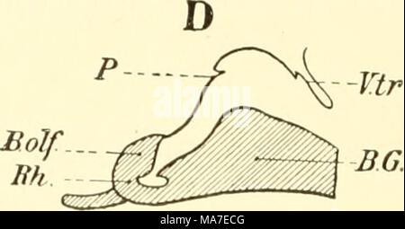 . Einführung in die vergleichende Anatomie der Wirbeltiere, für Studierende . - Stock Photo