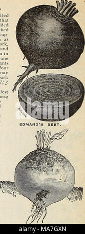 . E. H. Hunt : seedsman . YELLOW GLOBE MANGEL, MANGEL WURZEL AND SUGAR BEETS. The following varieties are extensively grown for feeding stock. As they grow much lar- ger than the varieties cultivated for table use, tliey require more room, and should be sown in drills about two feet apart. The seeds sliould be dropped about two inches apart in the drills, and when strong enough, thinned out to twelve or fifteen inches in the row. The long varieties are best suited to a deep soil, and the globe sorts 1 succeed better than the long sorts on sandy soil. Sow to 6 MAMMOTH LONG RED MANGEL. Ricli soi - Stock Photo
