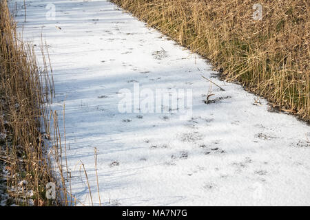 Frozen ditch covered with ice and snow - Stock Photo