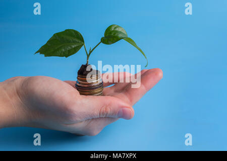 Plant Growing In Savings Coins - Investment And Interest Concept - Stock Photo