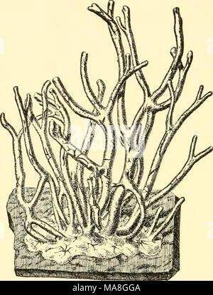 . Ecological animal geography; an authorized, rewritten edition based on Tiergeographie auf ockologischer grundlage . - Stock Photo