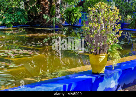 MOROCCO MAJORELLE GARDEN JARDIN REFLECTIONS IN A POOL WITH YELLOW POT AND PLANT ON A BLUE WALL - Stock Photo