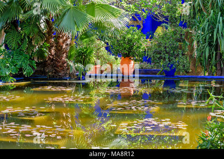 MOROCCO MAJORELLE GARDEN JARDIN REFLECTIONS IN BLUE WITH TERRACOTTA POT AND PLANT ON A BLUE WALL - Stock Photo