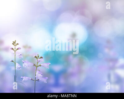 Beautiful light purple flowers on the colorful blurred background. Floral desktop. - Stock Photo